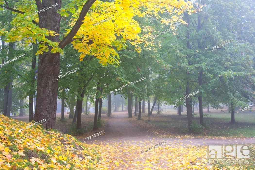 Stock Photo: Fall Colours in Dome Hill Park, Tartu, Estonia.