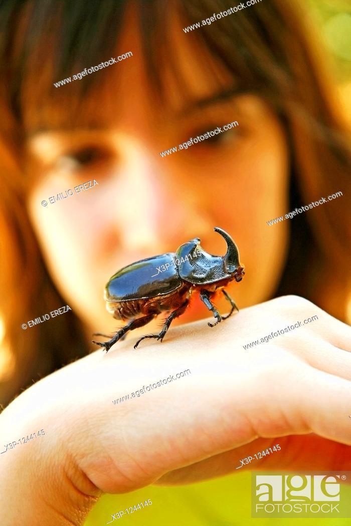 Stock Photo: Rhinoceros beetle Oryctes nasicornis.