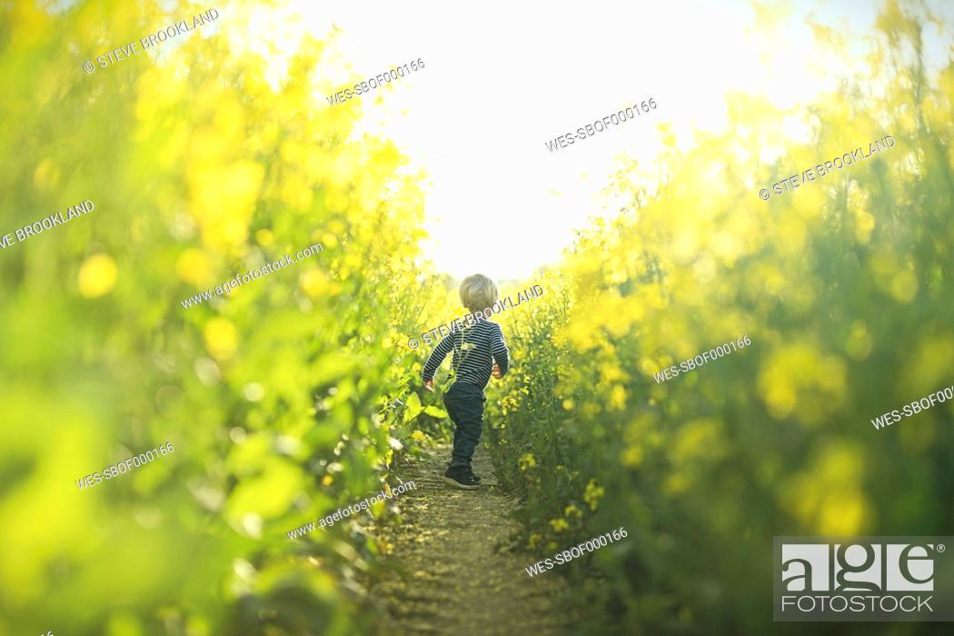 Stock Photo: Boy in canola field.