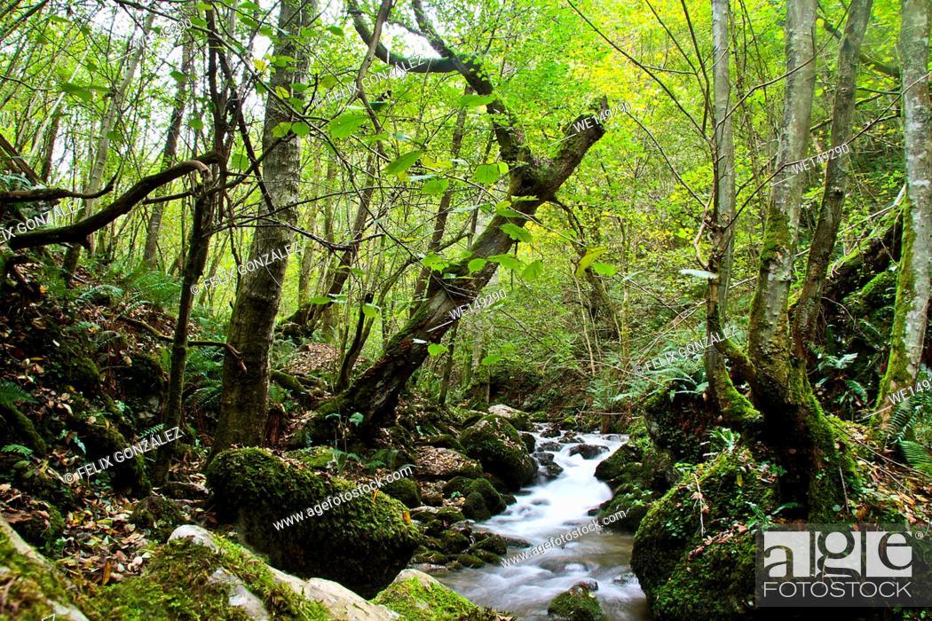 Stock Photo: Mossy Cascade in Ruta de las Xanas, Asturias, Spain.
