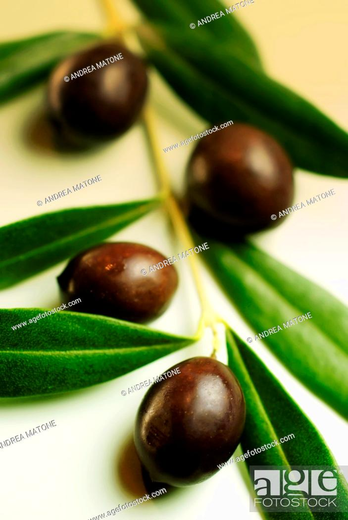 Stock Photo: Black olives with leaves on branch.