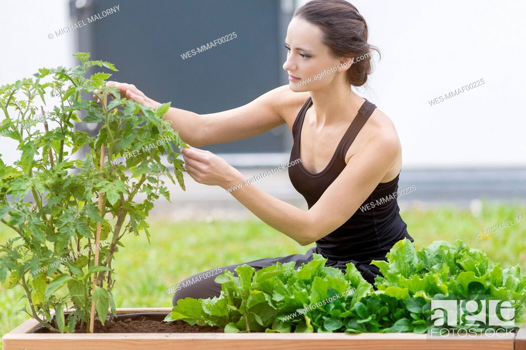 Stock Photo: Young woman harvesting, bed with salad and herbs in garden.