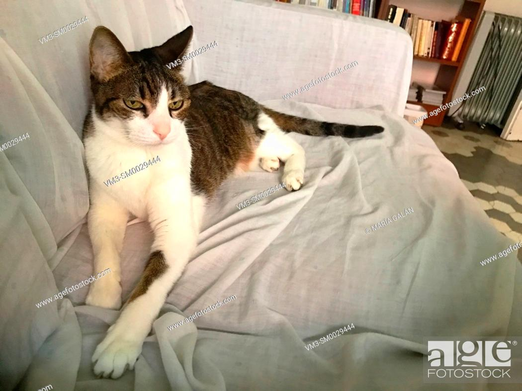 Stock Photo: Tabby and white cat lying on sofa.