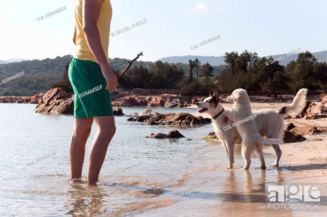 Stock Photo: Mid adult man playing stick with two dogs on beach, Sardinia, Italy.