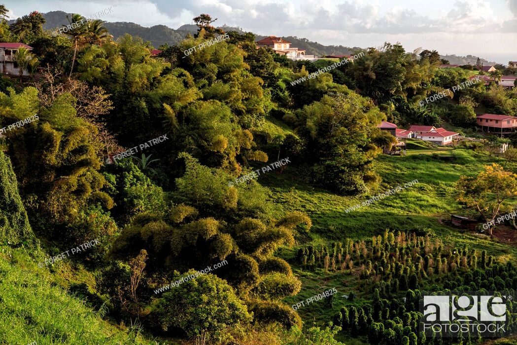 Stock Photo: TROPICAL VEGETATION AND THE VILLAGE'S HAMLET, LE MORNE ROUGE, MARTINIQUE, FRENCH ANTILLES, FRANCE.