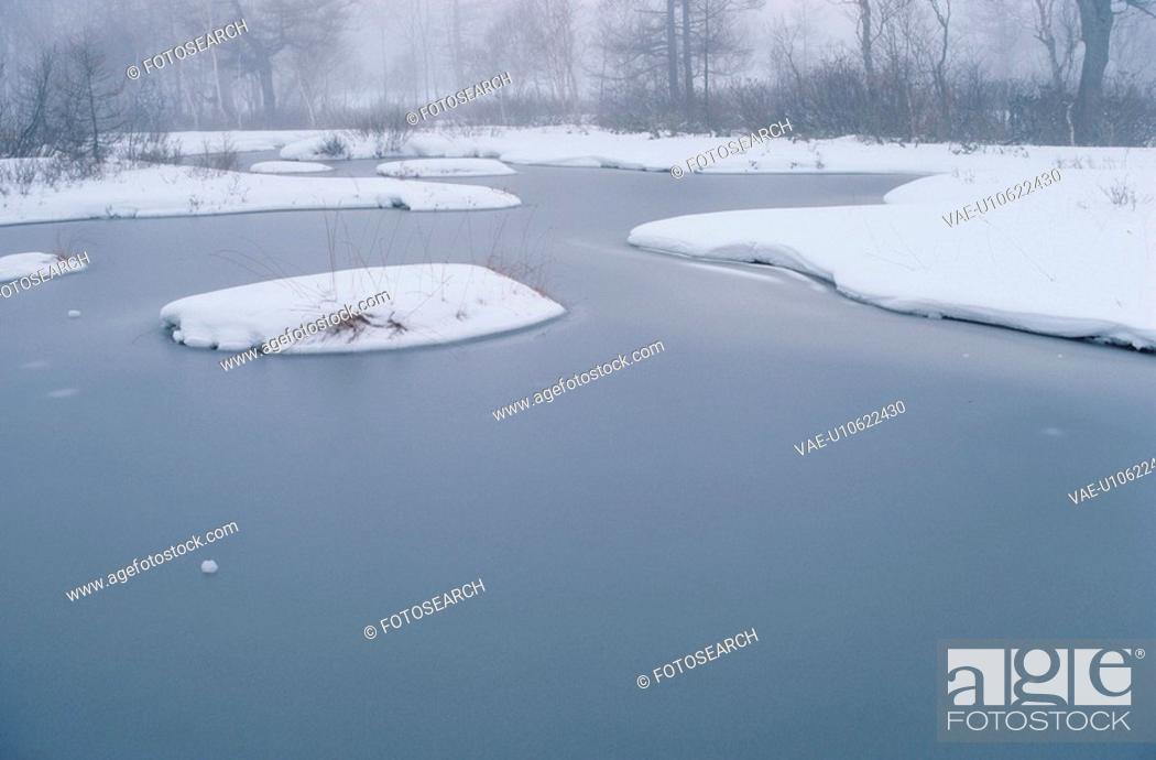 Stock Photo: Snowy Tussocks In Frozen Pond.