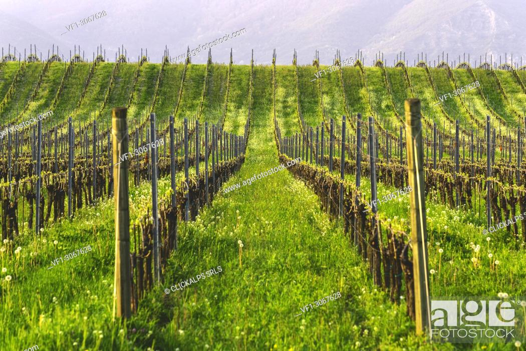 Stock Photo: Franciacorta, Lombardy district, Brescia province, Italy.