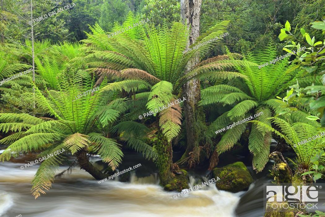 Stock Photo: Horseshoe fall, Tasmania (Australia).