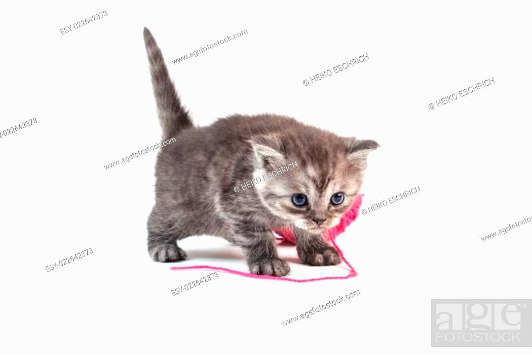 Stock Photo: junge Kätzchen.