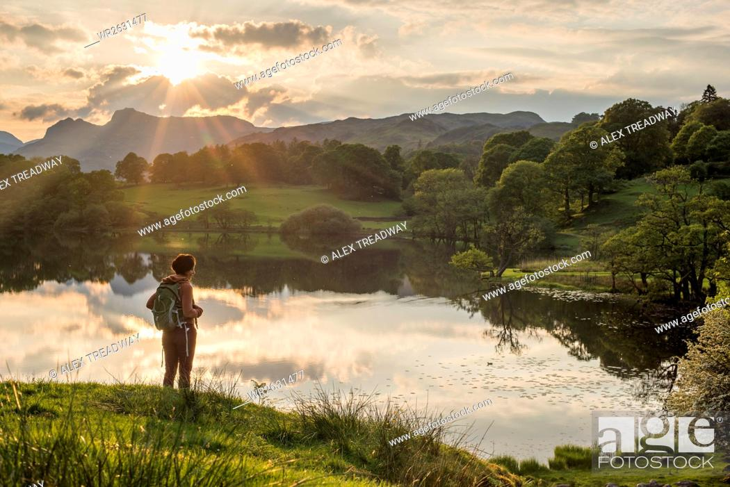 Stock Photo: A woman looks out over Loughrigg Tarn near Ambleside, Lake District National Park, Cumbria, England, United Kingdom, Europe.