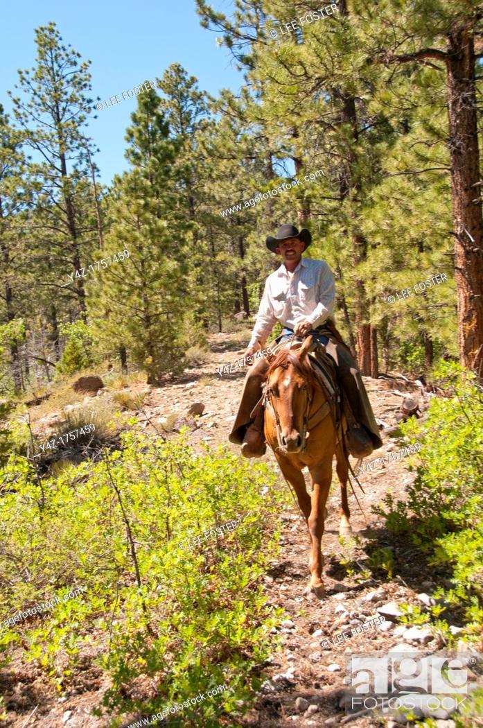 Stock Photo: USA, Utah, horseback ride in Escalante with wranglers Jamie Barnson and Cash Barnson through ponderosa pine forest up steep trail to Aquarius Plateau   MR.