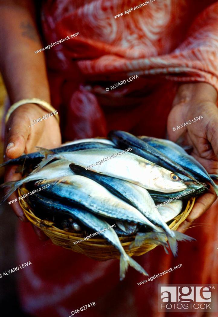 Stock Photo: Fish market. Panaji. Goa. India.