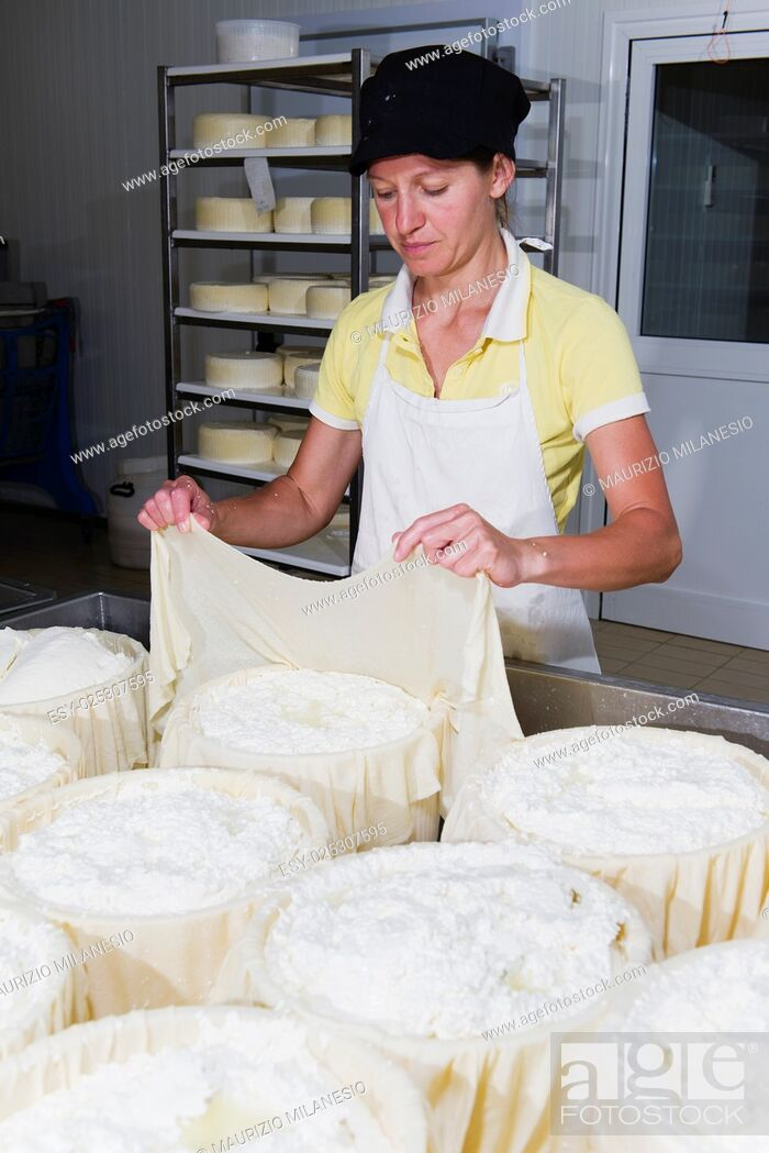 Stock Photo: Cheesemaker preparing fresh cheese to divide it into several pieces and forms.