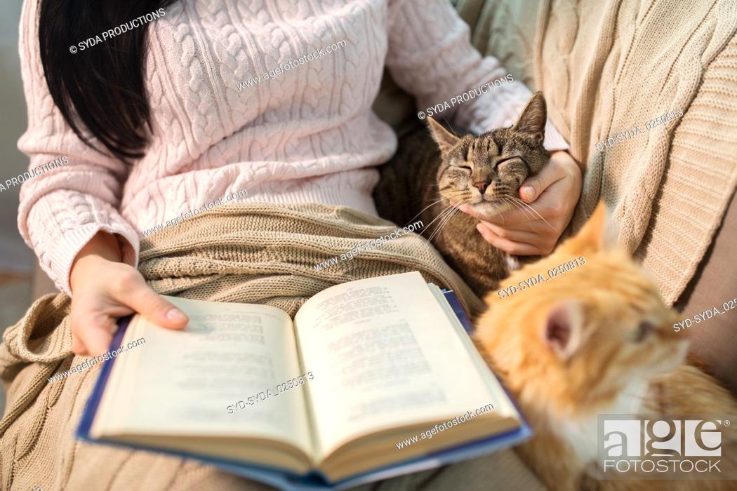 Stock Photo: red and tabby and owner reading book at home.