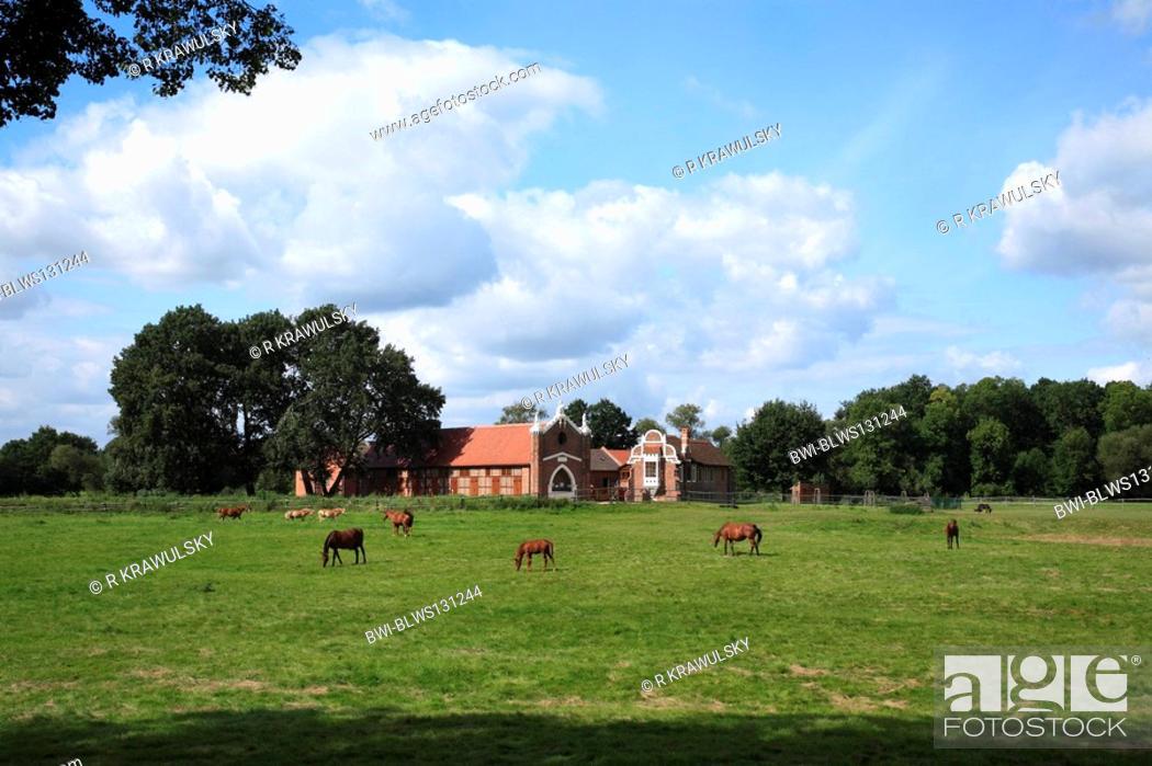 Stock Photo: landscape park Luisium, view on the neo-gothic stud, Germany, Saxony-Anhalt, Dessau.