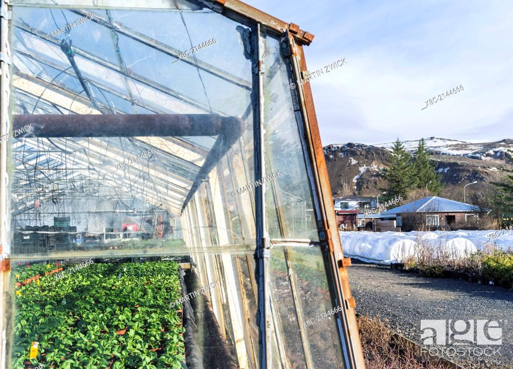Stock Photo: Hothouses, greenhouses in Hveragerdi in winter. They are heated by geothermal energy and supply a large part of the icelandic demand of vegetables like tomatoes.