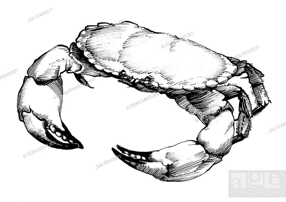 Imagen: Crab on white background.