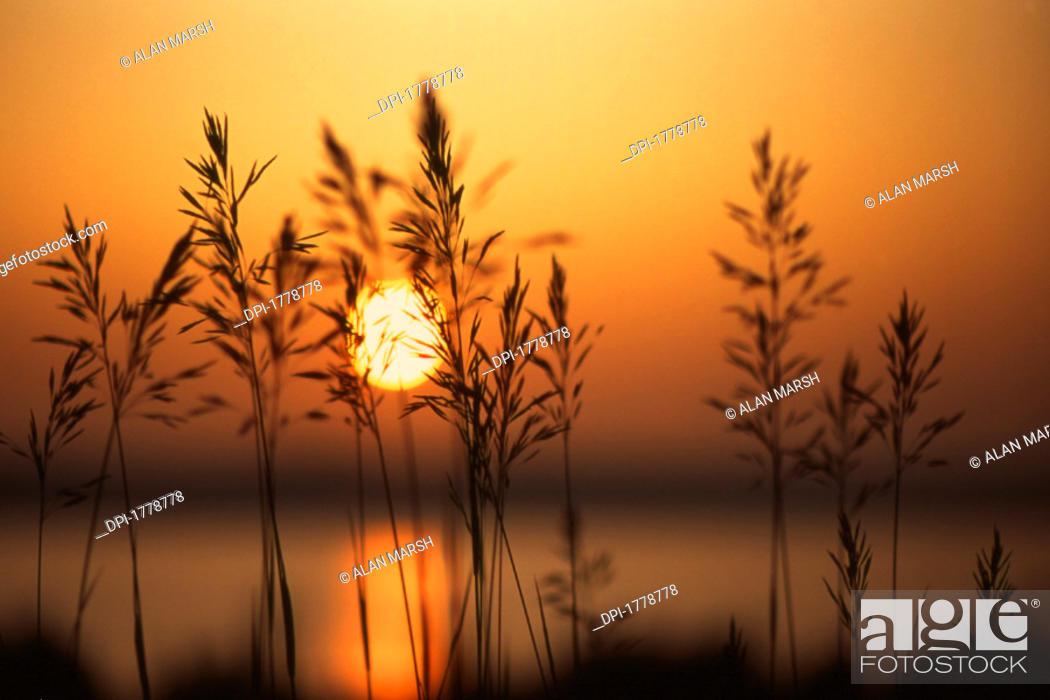 Stock Photo: Nature.