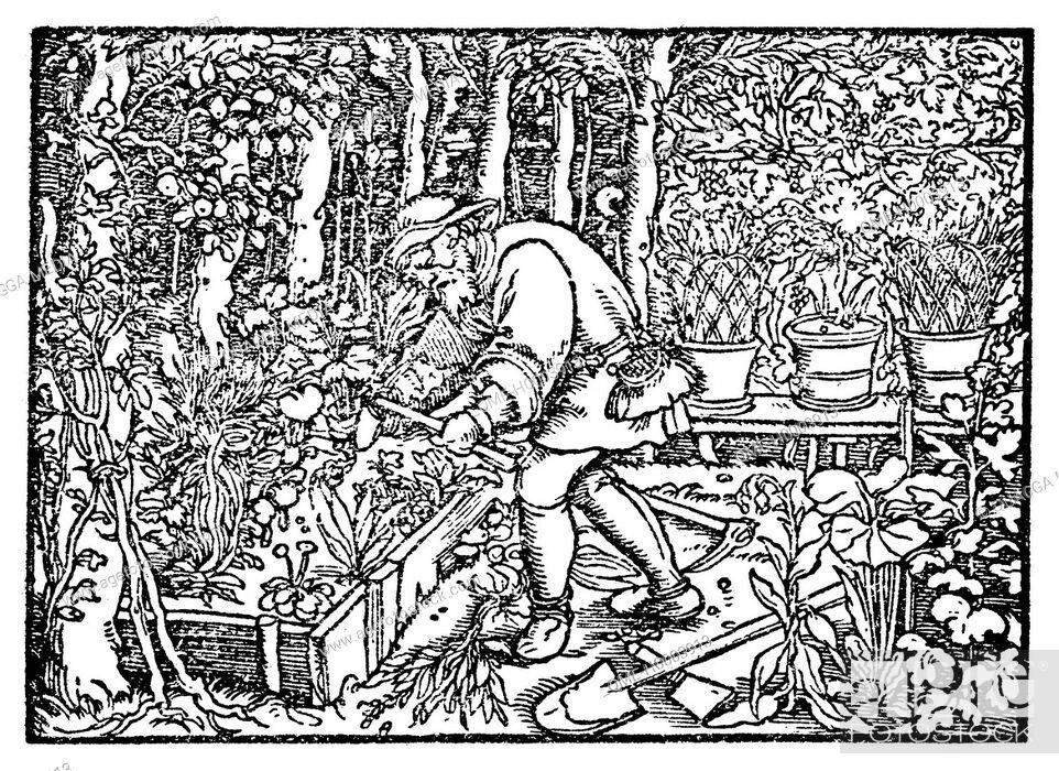 Stock Photo: Gardener.