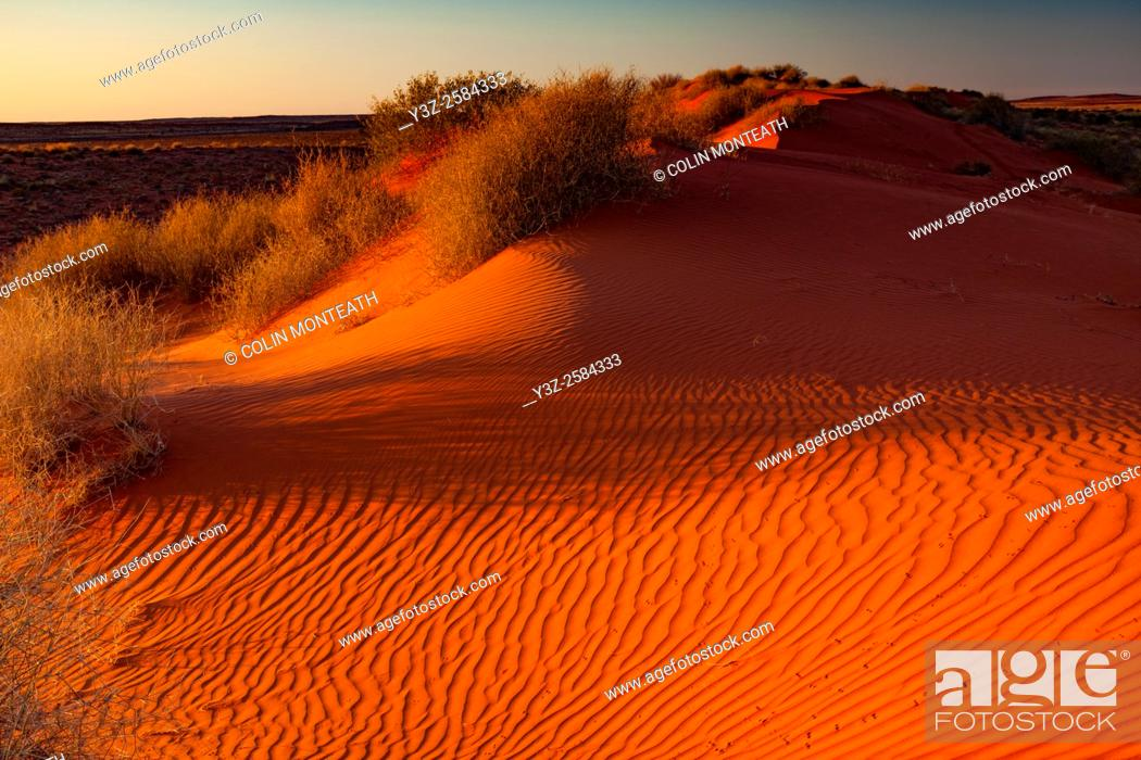 Imagen: Sand dune and spinifex grass, Old Andado Station, Simpson desert, Northern Territory, Central Australia.