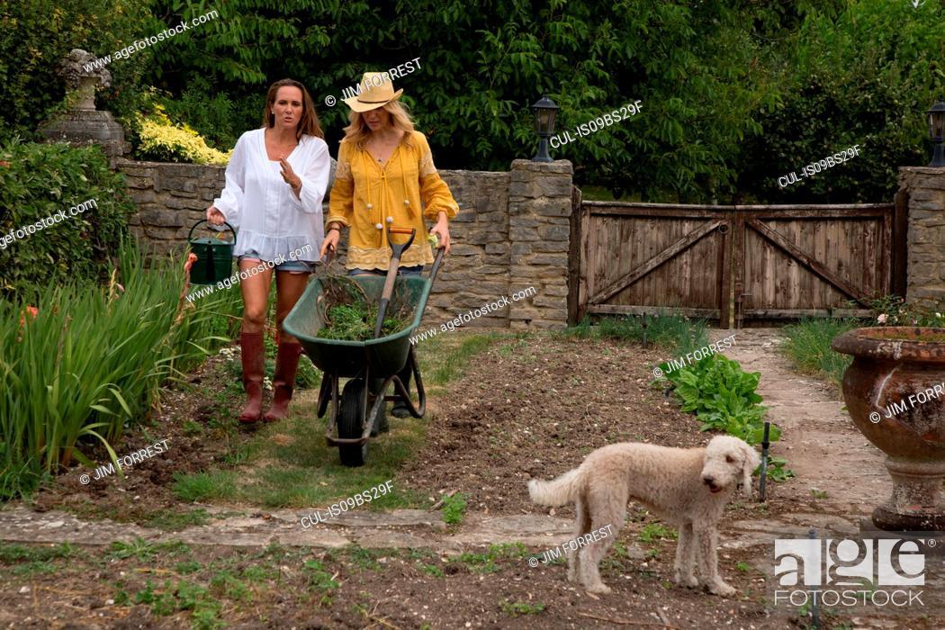 Stock Photo: Women using wheelbarrow in garden.
