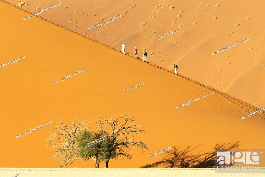Stock Photo: Namibia - Tourists at a sand dune with Camelthorn tree Acacia erioloba in the Namib Desert  Namib-Naukluft Park, Namibia.