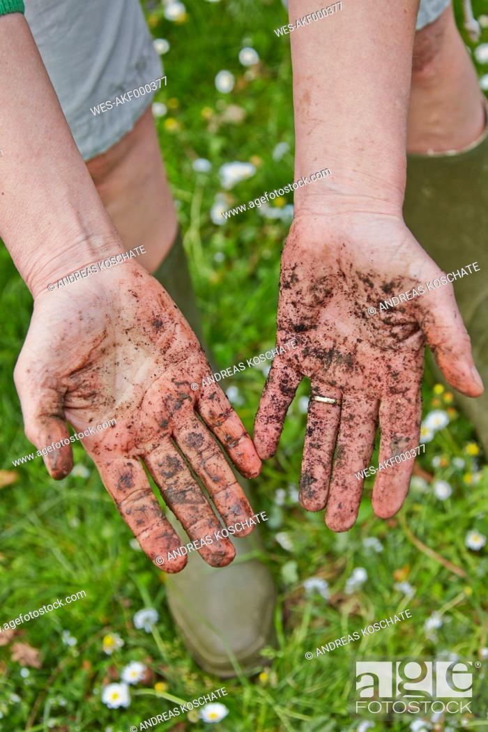 Stock Photo: Dirty hands of woman in garden.