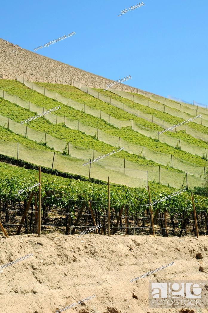 Vineyards, farming, fertile valley, desert mountains, Pisco