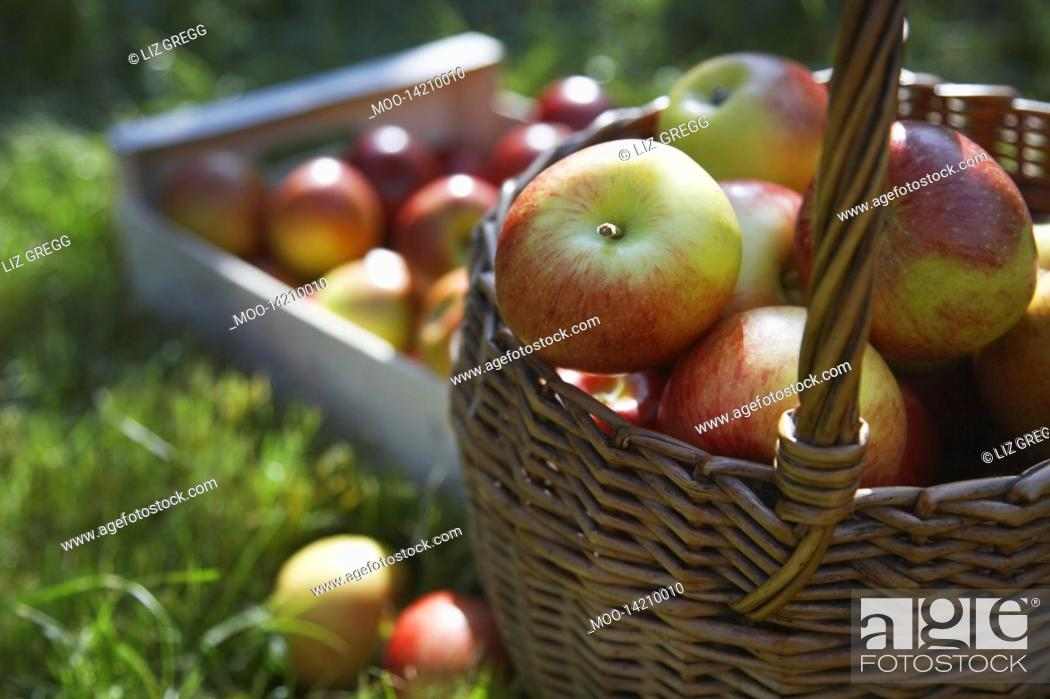 Stock Photo: Basket and crate of apples on grass.