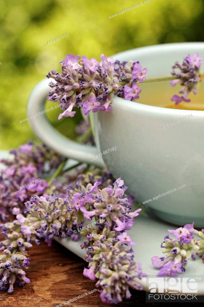 Stock Photo: Lavender infusion (Lavandula officinalis).