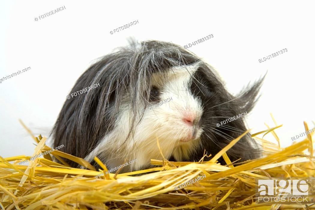 Stock Photo: tierportraits, pet, alfred, animal, animal portrait, animals.