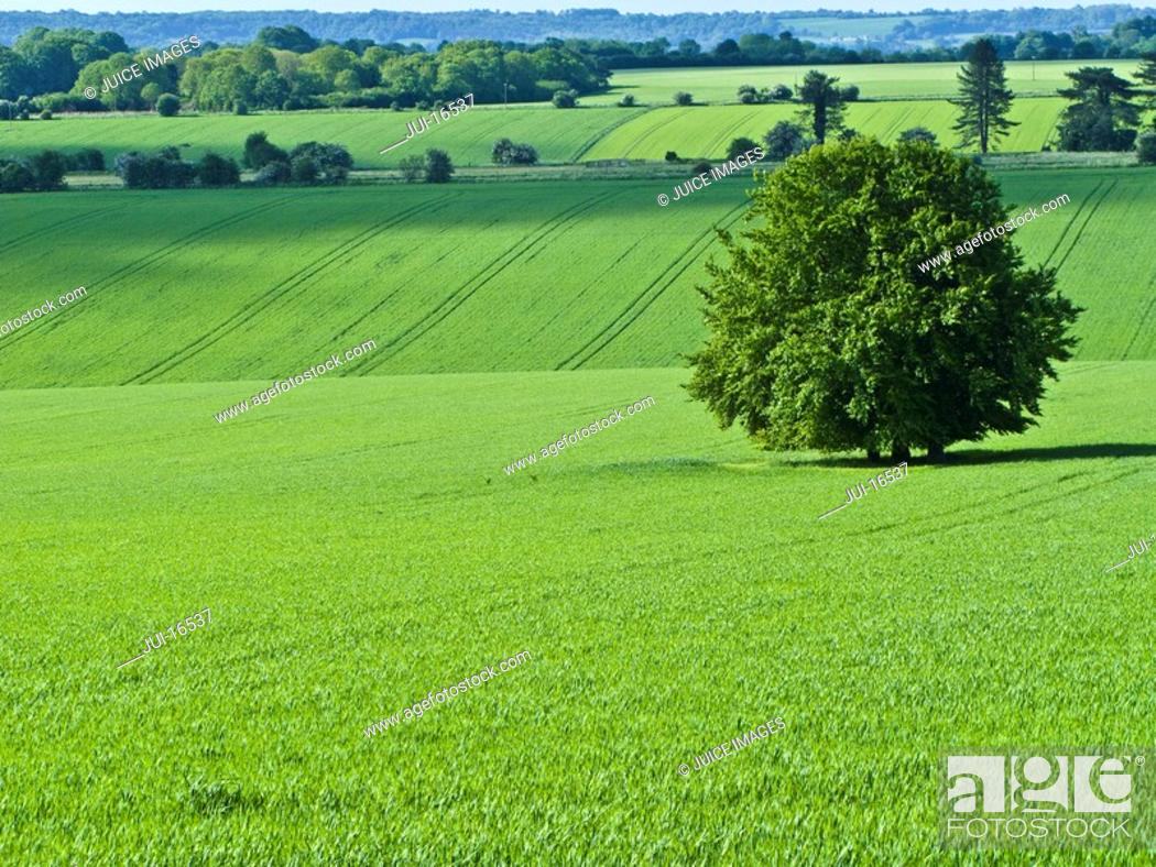 Stock Photo: Green fields and tree.