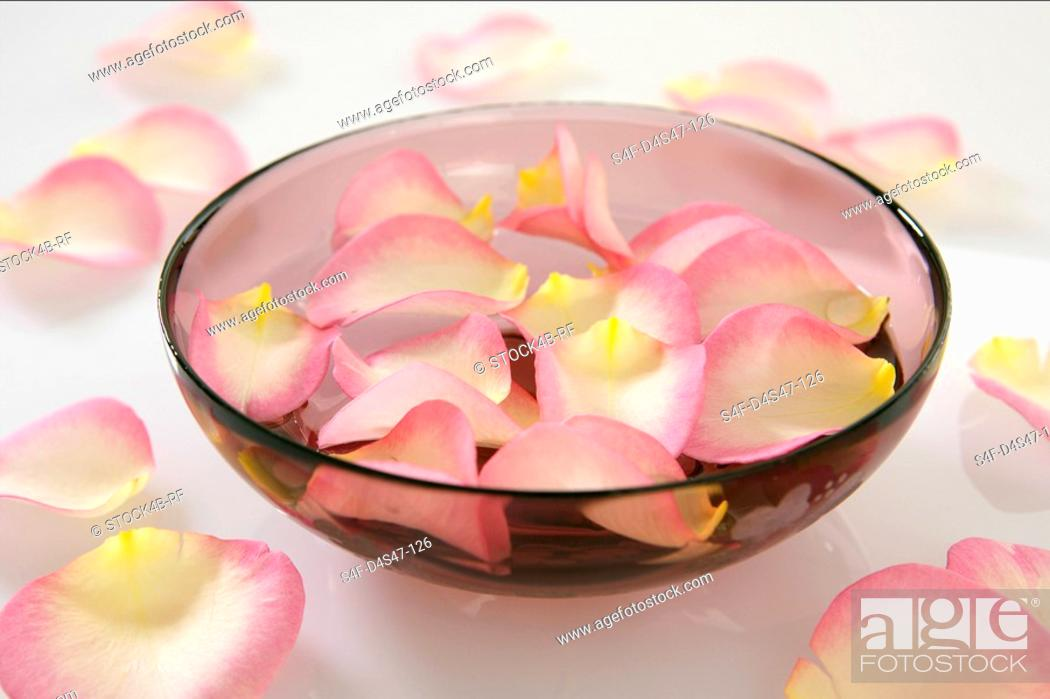 Stock Photo: Rose petals in a dish.