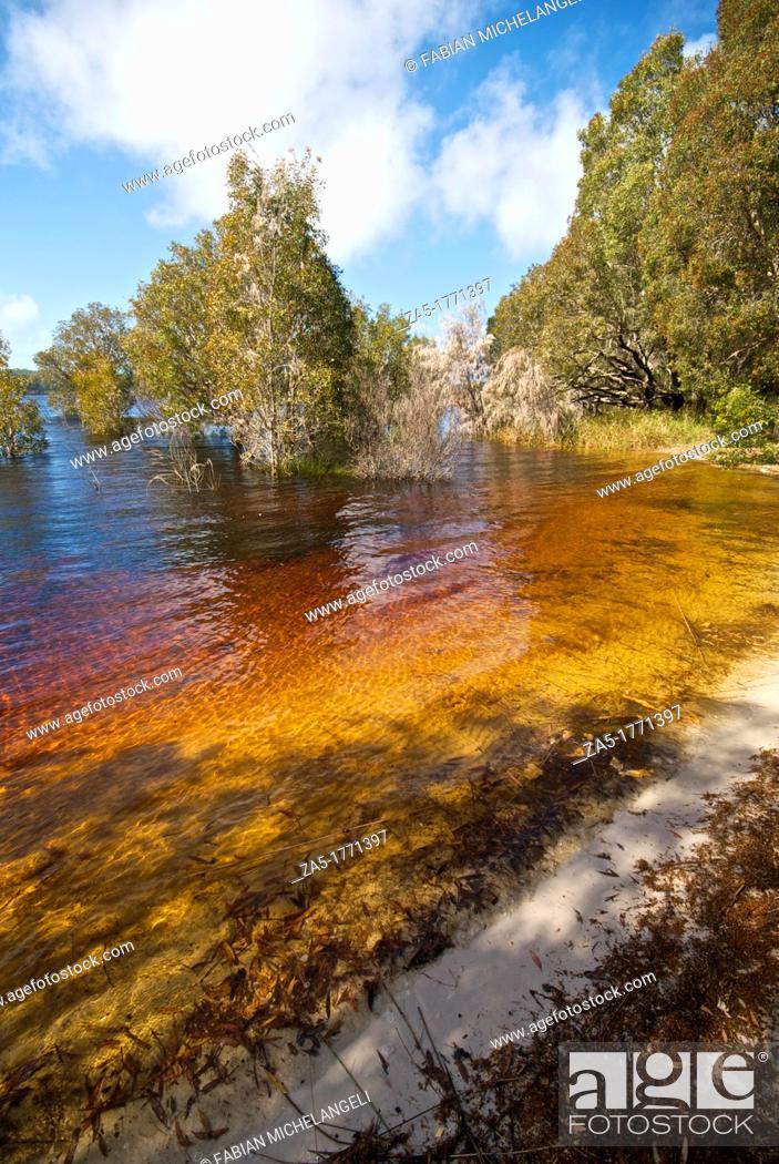 Imagen: Lake Boomanjin, a fresh water lake on Fraser Island Great Sandy National Park, Queensland, Australia.