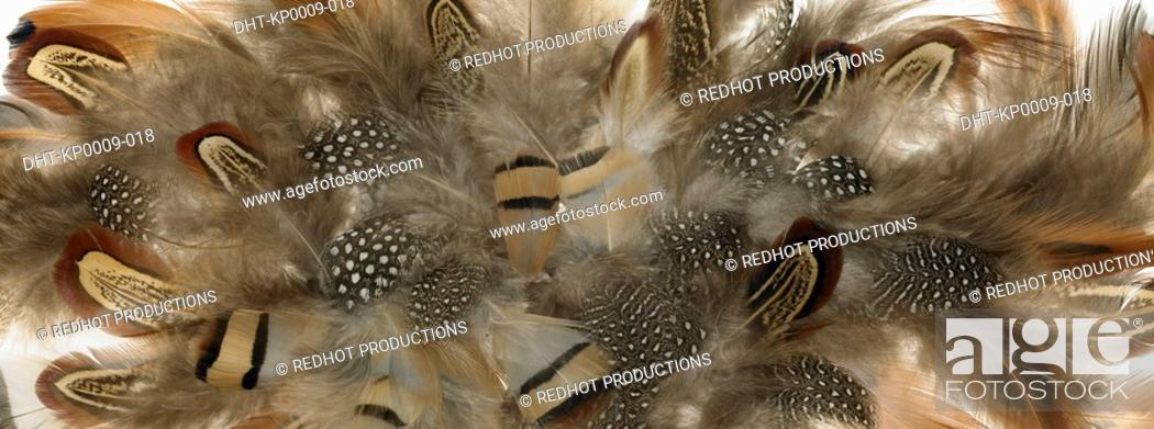 Stock Photo: Brown and white Feathers close up.