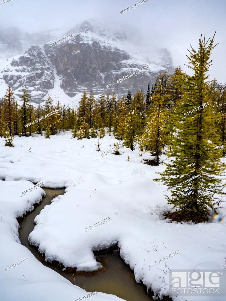 Imagen: Canadian Rockies. Assiniboine Provincial Park.. Winter.