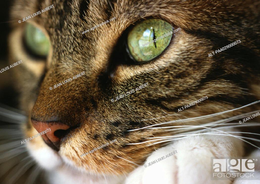 Stock Photo: Cat's face, close up.