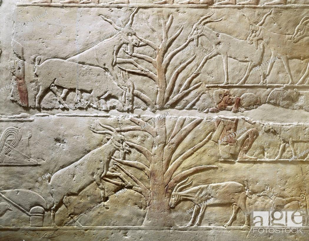 Imagen: Egyptian civilization, Old Kingdom. Relief depicting goats grazing a sycamore tree. From the Mastaba of Akhatep, Saqqara.  Paris, Musée Du Louvre.
