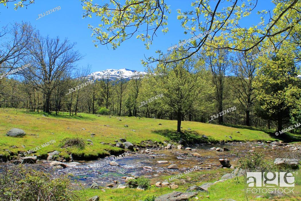 Stock Photo: Aguilón river runs through high Lozoya Valley at late Spring while Peñalara snowcapped summit (2, 428 m, the highest one in Sierra de Guadarrama mountains and.