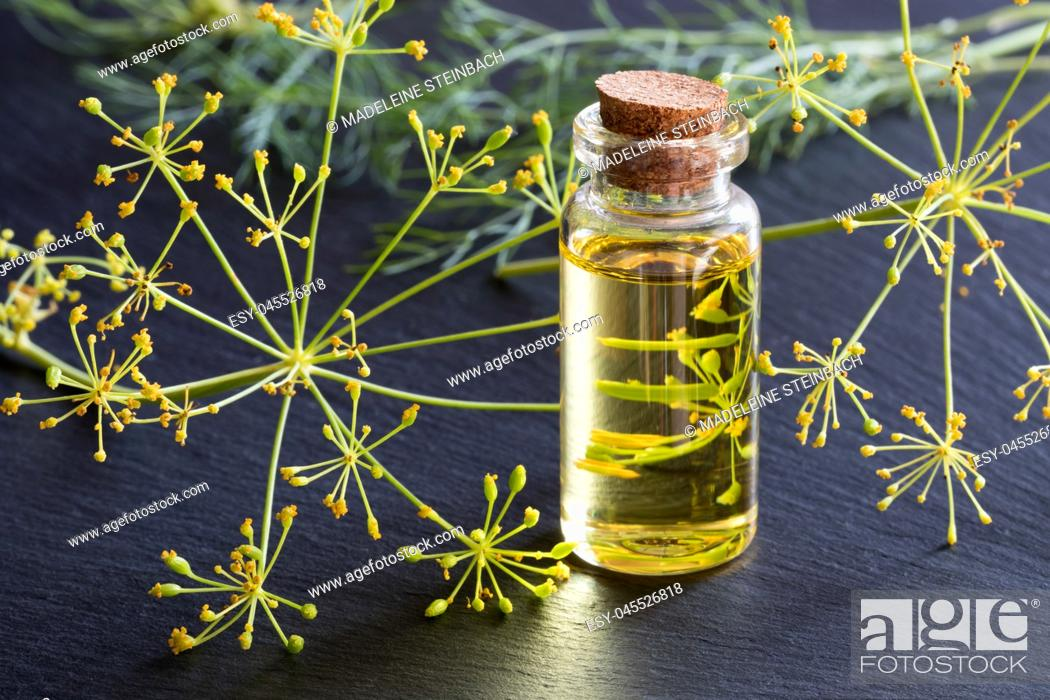 Stock Photo: A transparent bottle of dill seed oil with fresh dill in the background.