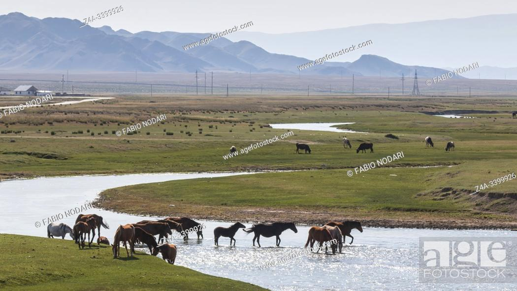 Stock Photo: Horses crossing a river in Kazakhstan.