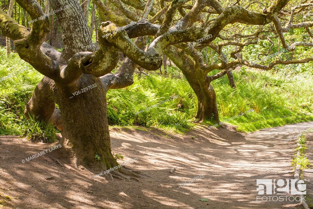 Stock Photo: Magical trees in Ayeshire, Scotland.