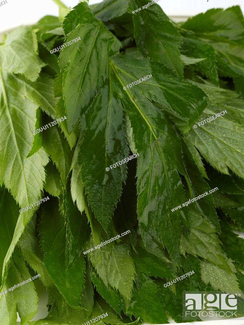 Stock Photo: vegetables, food, ingredient, food material, cuisine, ashitaba.