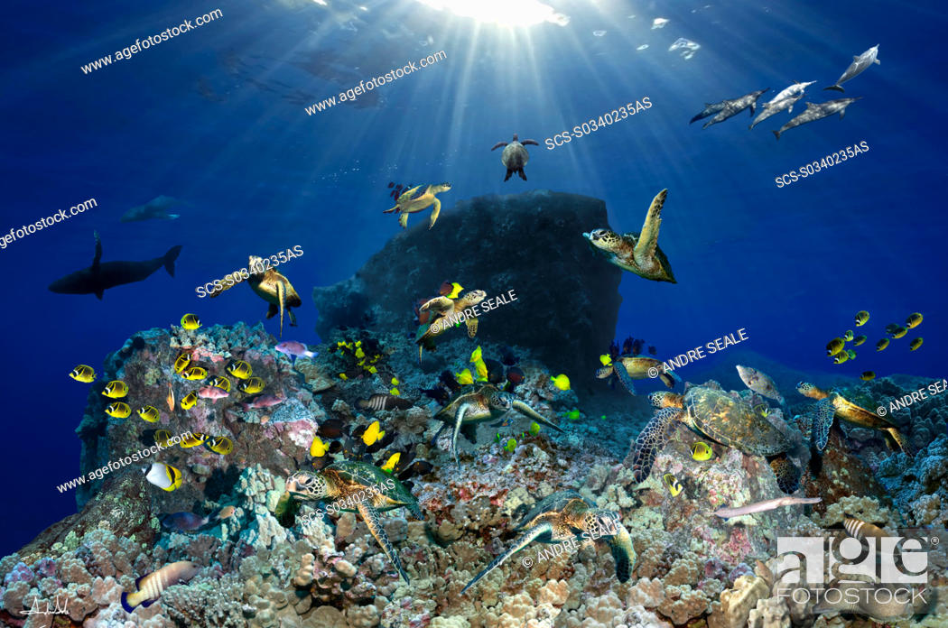 Stock Photo: Digital composite of tropical coral reef environment.