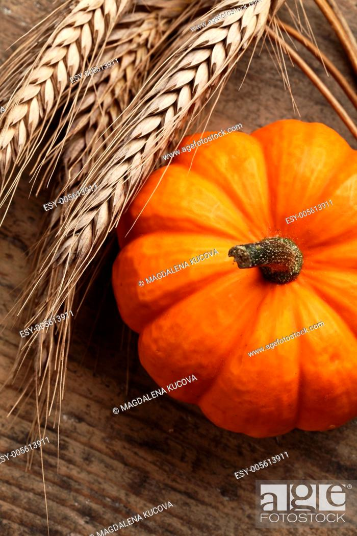 Stock Photo: Close-up of little pumpkin and grain.