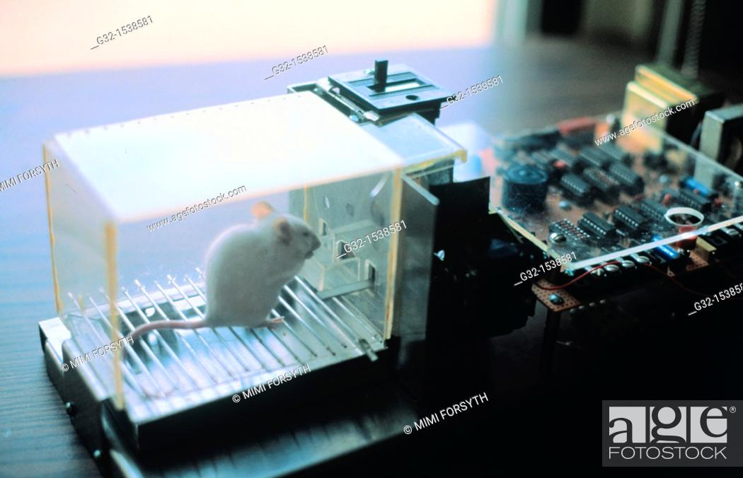 Stock Photo: Lab rat in Skinner box.