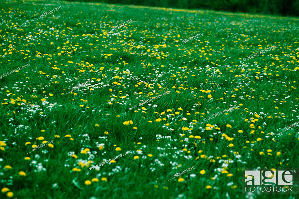 Stock Photo: Meadow with flowers.