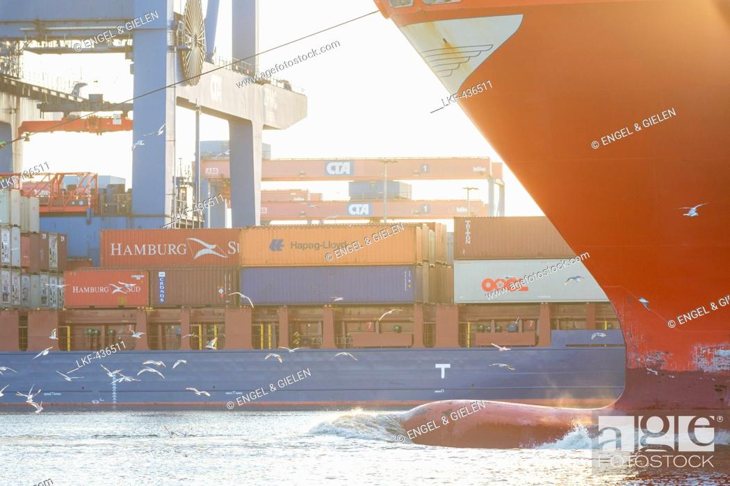 Stock Photo: Ship travelling through the container terminal Altenwerder, Hamburg, Germany.