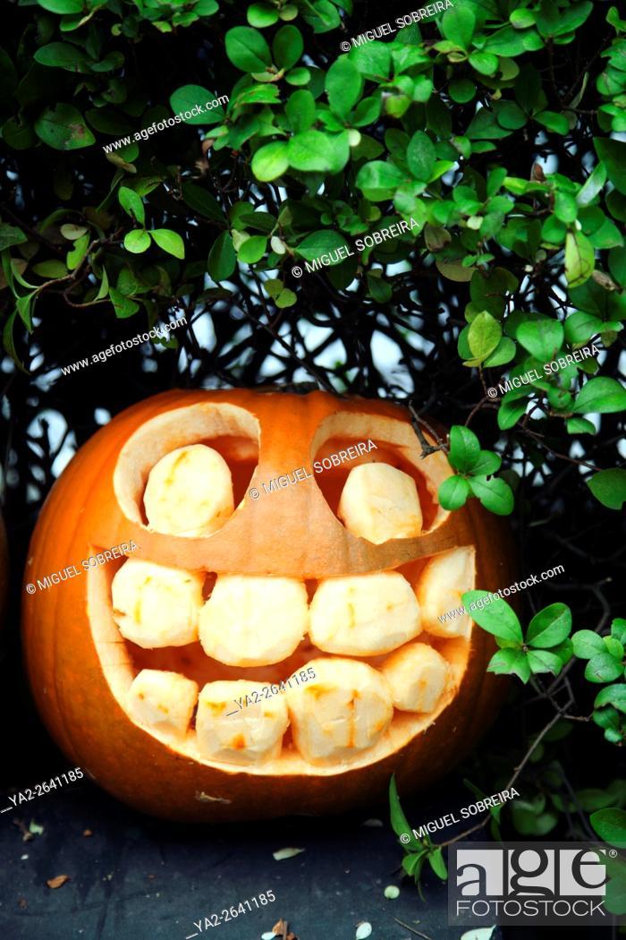 Stock Photo: Happy Punmpkin.