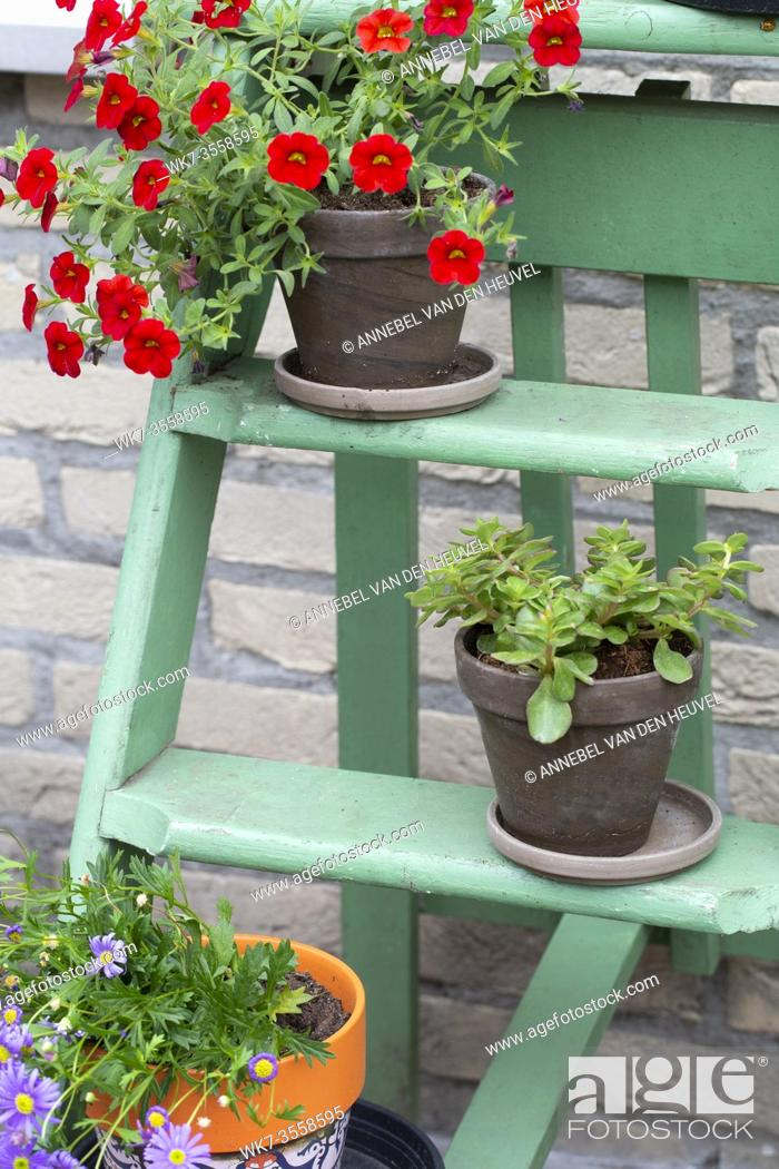 Stock Photo: Various colorful flowers in pot on small green wooden stairs in the garden for decoration, close-up.